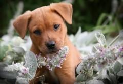 Собачка, собака, цветы, милашка, пушистик