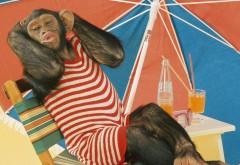 Обезьянка загарает на пляже по зонтиком в купальнике