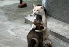 Дружба кота и собаки, кот обои, собака картинки