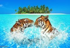 Пара тигров плавает в голубом море на остров обои