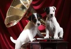 Патефон,  граммофон, собачки, собаки, в крапинку