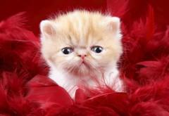 Обои милой пушистой лапочки котенка