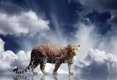 Обои леопарда на рабочий стол