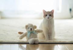 Грустный кот с большими глазами широкоформатные обои