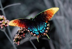 Бабочка заставка