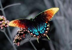 Бабочка заставка на рабочий стол