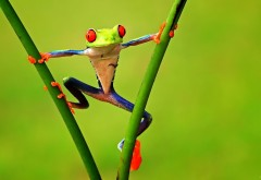 Лягушка разноцветная на зеленом фоне