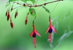 Цветущее дерево картинки скачать