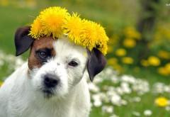 Добрая собачка с венком из одуванчиков на голове