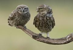 Прикольные птички на ветке