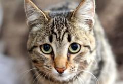 Обои глазастой кошки