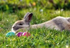 Пасхальные яйца и кролик