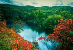 Зеленый лес у озера обои лета