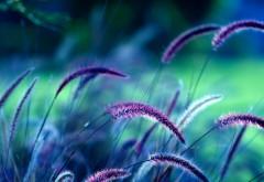 Фиолетовое поле обои природы 2560x1600