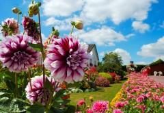Цветочная лужайка у дома