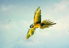 Попугай в небе