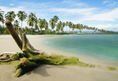 Пляж, песок и пальмы жара