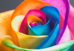 Разноцветная роза абстрактные обои