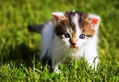 Котенок на траве обои