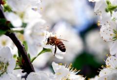 Макро обои пчелы