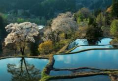 Красивые пруды на холмах