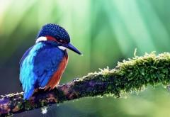 Птичка на веточке с паутинкой