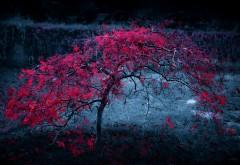 Осень красные листья на молодом дереве