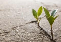 Молодые ростки растений в земле