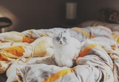 Котик на кровати