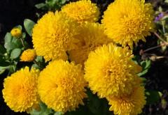 Желтые цветы обои