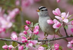 Птица весны