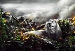Лев в Джунглях