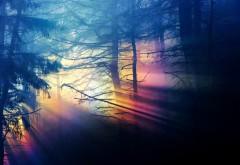 Цвета радуги в лесу