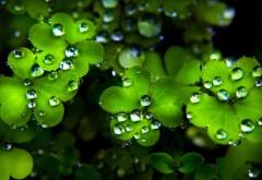Капли воды на листьях