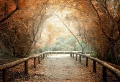 1920x1200, природа, деревья, листья