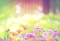 Залитые солнцем цветы