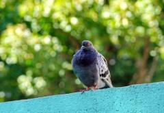 Голубь на крыше