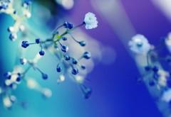 Макро снимок мелких белых цветочков