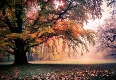 Золотая пора пейзаж осень