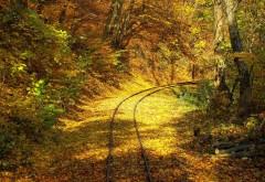 Желтая осень в лесу на фоне железной дороги