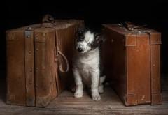 1920x1200, Собака на чемоданах