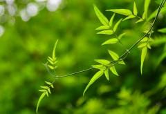 Лето, зеленые ветки, природа