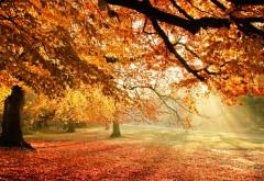 1920x1200 Солнечный свет на осенние деревья