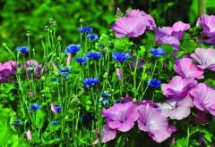 Красочные обои ярких цветов