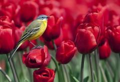 Птичка на цветах тюльпанов