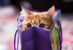 Рыжий котенок подарок милая картинка