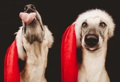 Раждествеские собачки в красных колпаках