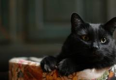 1920x1200 Черный кот на диване