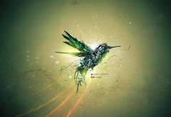 абстрактная колибри