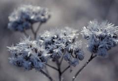 Высококачественные обои замерзших растений